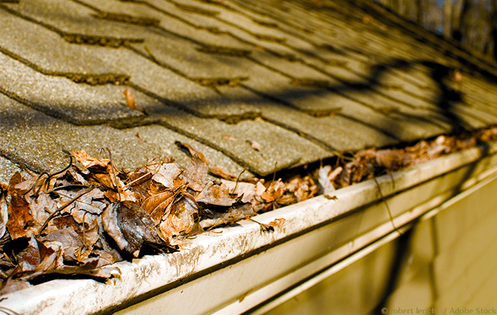How To Clean Out Gutters And Why You Should Showme